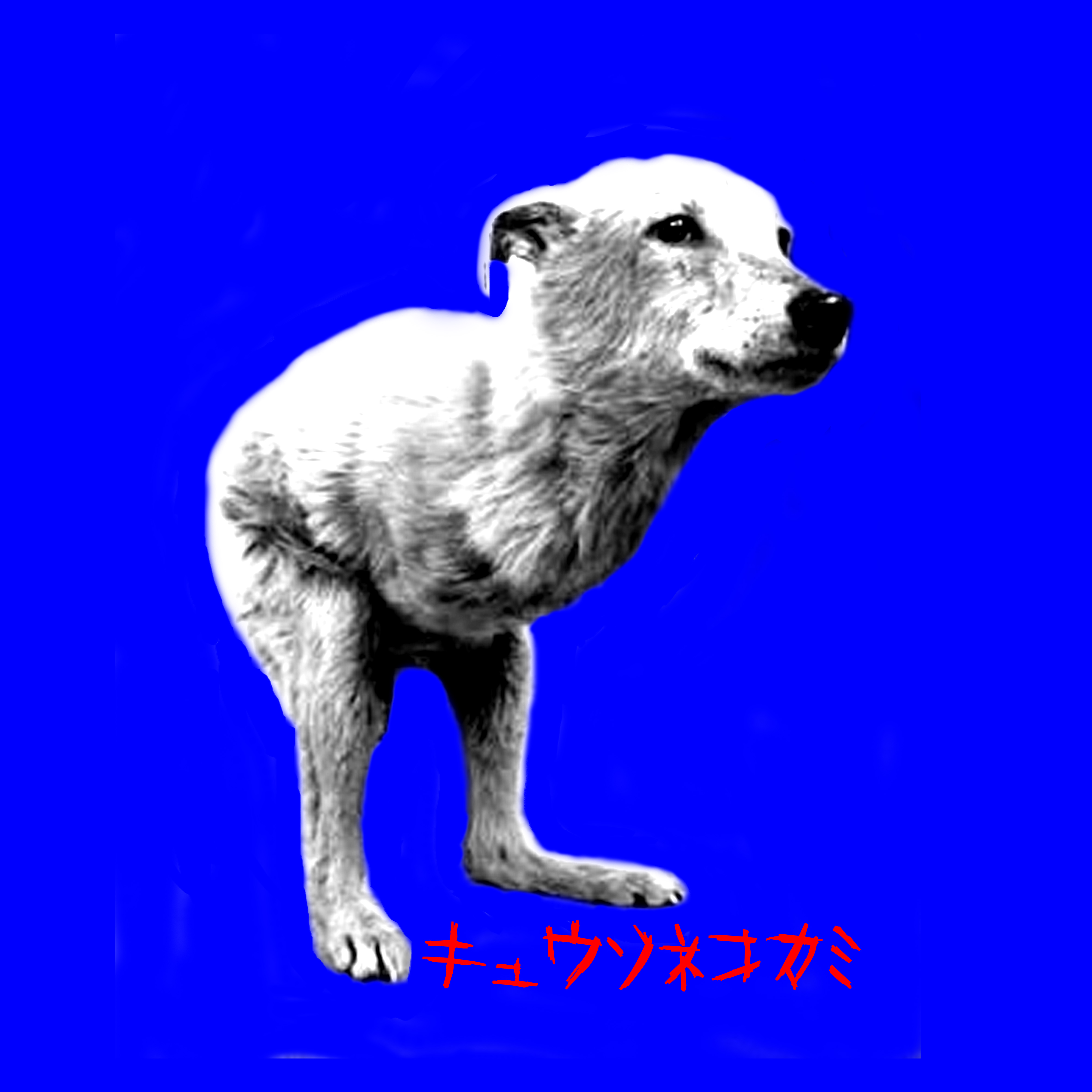 キュウソネコカミ(青盤)