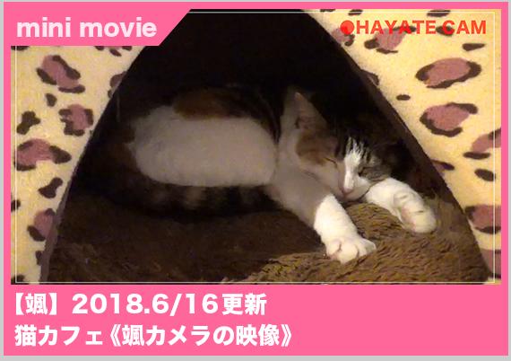 猫カフェ颯カメラ
