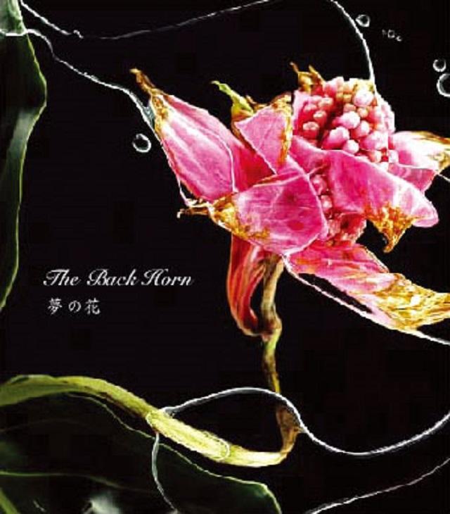 8th Single夢の花
